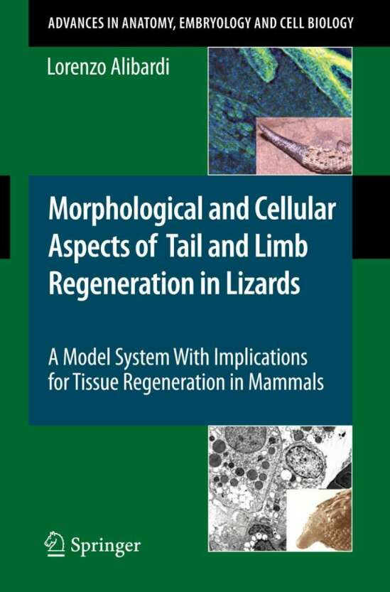 Morphological and Cellular Aspects of Tail and Limb Regeneration in Lizards