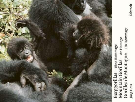 Berggorillas. Gorilles de montagne. Mountain Gorillas