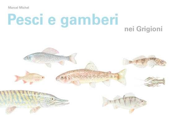Pesci e gamberi nei Grigioni